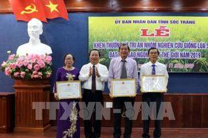 Giống lúa thơm ST25 được công nhận đặc cách