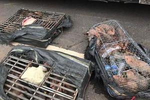 CSGT Đà Nẵng bắt các vụ chở động vật và hàng lậu lớn