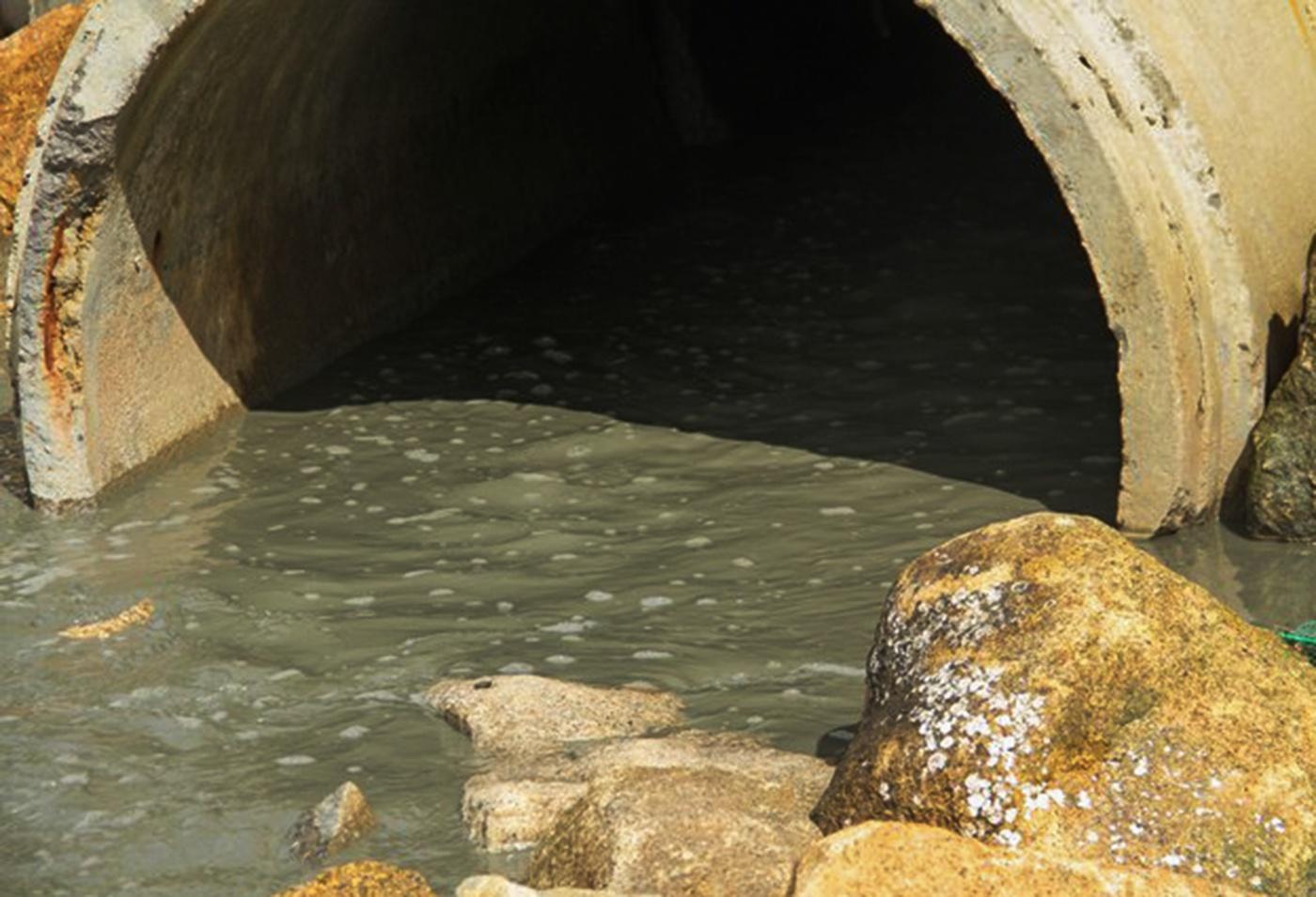 Nước biển Quy Nhơn bị nhuộm đen bất thường