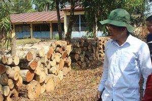 Vụ phá rừng ở khu bảo tồn: Ba người làm công không đốn hạ cây rừng