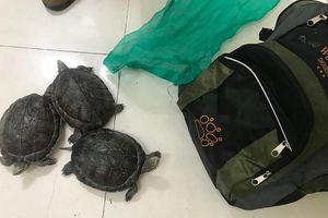 Đi làm đồng bắt được 3 con rùa quý hiếm