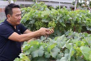 Các địa phương chuẩn bị hàng nông sản phục vụ Tết