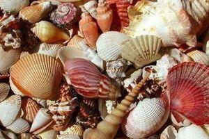 Một người tử vong, bảy người nguy kịch vì ngộ độc khi ăn ốc biển