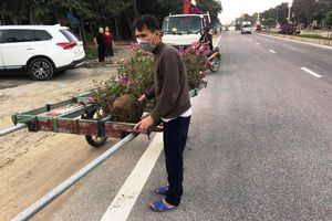 Hà Tĩnh: Khởi tố đối tượng trộm cắp cây cảnh nơi đô thị