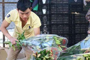 Tin Tây Nguyên: Giá hoa lily Lâm Đồng cao hơn năm trước