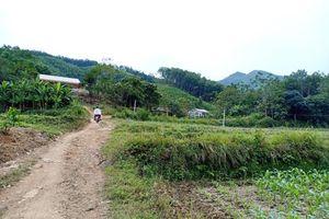 Sớm xử lý dứt điểm sai phạm về dự án trồng rừng của Công ty Sahabak