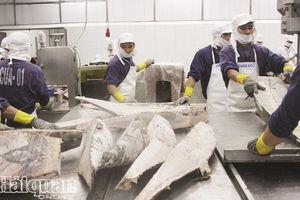 Ngành thủy sản đang tập trung giải pháp thực hiện quy định của EU