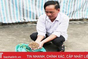 Cung ứng giống lúa ở Hà Tĩnh: Không ít doanh nghiệp 'qua mặt' cơ quan quản lý