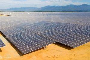 Bổ sung dự án điện mặt trời 450 MW tại Ninh Thuận vào quy hoạch