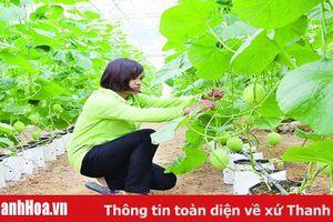 Nâng cao hiệu quả hoạt động các HTX nông nghiệp
