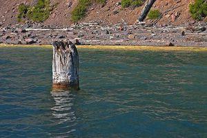Kỳ bí gốc cây khô có thể điều khiển thời tiết một phương