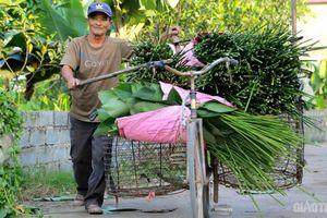 Hà Nội: Thủ phủ lá dong vào vụ Tết, người trồng thu bạc triệu mỗi ngày