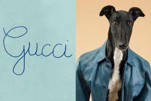 Gucci thay ảnh đại diện, chó mặc quần áo và loạt quảng cáo độc lạ