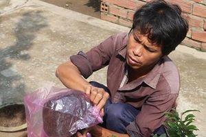 Giàu nhờ trồng mai tết