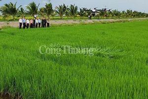 Gạo ngon nhất thế giới ST25 do quân đội sản xuất đã có mặt trên thị trường