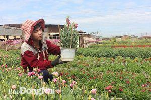 Vùng hoa lớn nhất Đồng Nai vào Tết