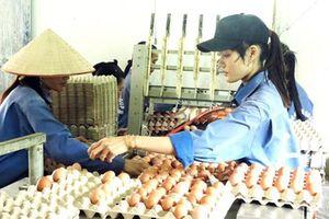 Ngành chăn nuôi hướng tới chuyên nghiệp và hiệu quả