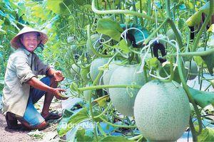Thúc đẩy nông dân ứng dụng công nghệ cao trong sản xuất