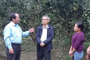 Khuyến nông góp phần quan trọng vào kết quả sản xuất nông nghiệp