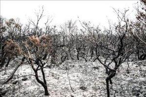 Định lượng 'được' và 'mất' của kinh tế Australia sau thảm họa cháy rừng lịch sử (Phần 2)