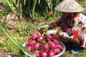 Cận Tết, nhiều loại trái cây ở Tiền Giang hút hàng, sốt giá