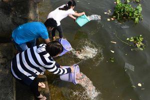 Những địa điểm 'vàng' để thả cá chép ngày ông Công ông Táo tại thành phố Hà Nội và Hồ Chí Minh