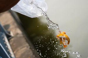 Hà Nội: Cá chép 'đi cầu trượt' lên chầu Trời