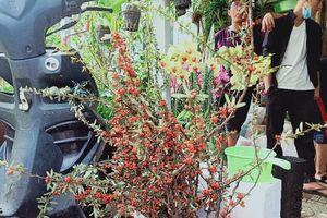 Hoa ngoại nhập lạ gây sốt chợ hoa tết