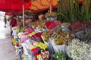 Nhộn nhịp những phiên chợ hoa ngày cuối năm