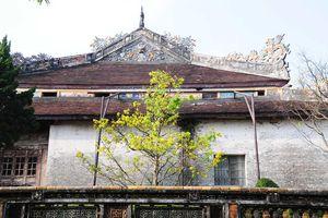Chùm ảnh: Huế, Đà Nẵng rực rỡ sắc xuân