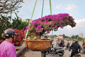 Vì sao Đà Nẵng thay đổi giờ kết thúc Chợ hoa Tết 2020 trên đường 2/9?