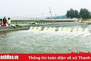 Xã Quảng Nham: Sản lượng khai thác hải sản đạt 10.600 tấn