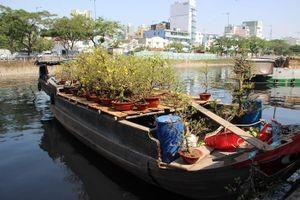 Xuân về khoe sắc trên bến Bình Đông, Sài Gòn-Chợ Lớn