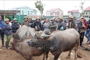 Chợ trâu bò lớn nhất Đông Nam Á giao dịch phiên cuối cùng của năm cũ