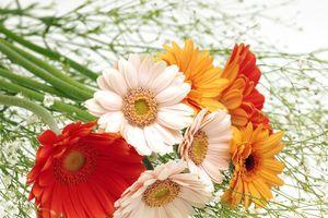 10 loại hoa nhất định phải mua trong dịp Tết