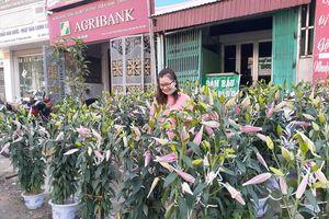 Điện Biên: Người dân vùng cao sắm hoa chơi Tết vẫn rất thưa thớt