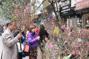 Những chợ hoa nổi tiếng đất Hà Thành rộn ràng sắc Xuân Tết Canh Tý