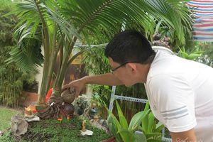 Bonsai độc đáo từ quả dừa khô bỏ đi của người đàn ông Sài Gòn