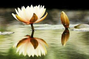 5 điều ai cũng phải trải qua trong đời: Hoang mang làm gì, hãy cứ bình tĩnh mà đón nhận