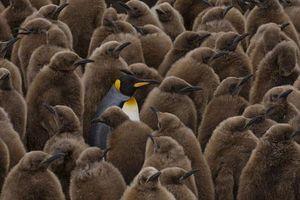 Những khoảng khắc vui nhộn của động vật hoang dã