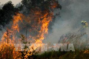 Cháy rừng quay trở lại, Australia sơ tán người dân thủ đô