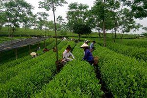Ngành nông nghiệp: Dư địa lớn từ liên kết chuỗi