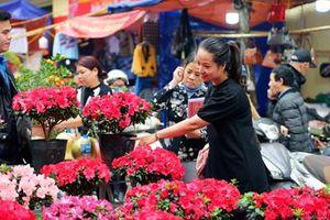 Chợ hoa Hàng Lược ngập tràn sắc xuân