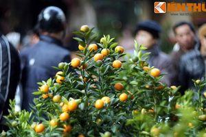 Vì sao người Việt chơi quất ngày Tết để chiêu tài gọi lộc, cầu may mắn?