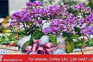 Hoa tết đẹp - độc - lạ ở Hà Tĩnh thỏa sức cho khách chơi Tết Canh Tý