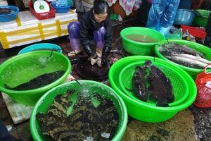Sức mua hải sản những ngày cuối năm không tăng