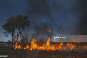Cháy rừng diễn biến nghiêm trọng, Australia nỗ lực giải cứu động vật