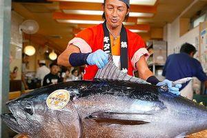 Đầu bếp Nhật xẻ thịt cá ngừ vây xanh hơn 100 kg làm sushi