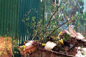 Chùm ảnh: Đào ế bị vứt bỏ chiều tối 30 Tết
