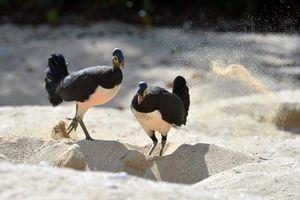 Bất ngờ sức sống loài chim đáng thương bị bỏ rơi từ trong trứng